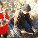 انتاج الزعفران والنباتات الطبية